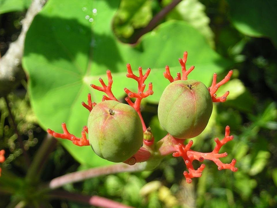 Nature and Scope – Botany | Merofuture