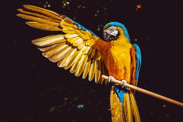 The Brave Little Parrot – Four Levels of Interpretation | BBA Notes